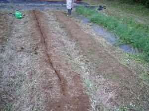 種をまいた畝